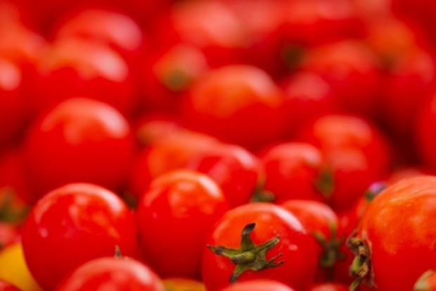 La Tomatina – პომიდვრით ბრძოლა