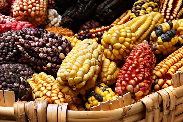 Писали ли Майя на кукурузе?